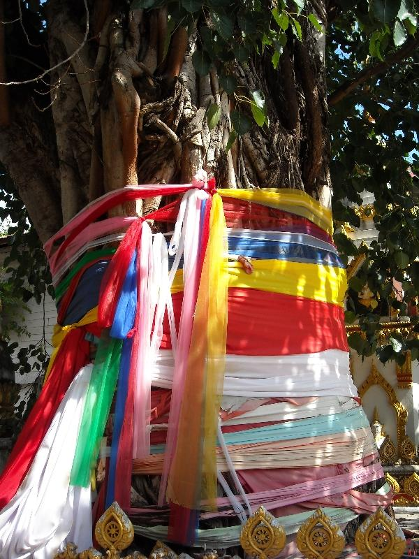 Savannakhet Province Laos Sacred tree decorations in Savannakhet