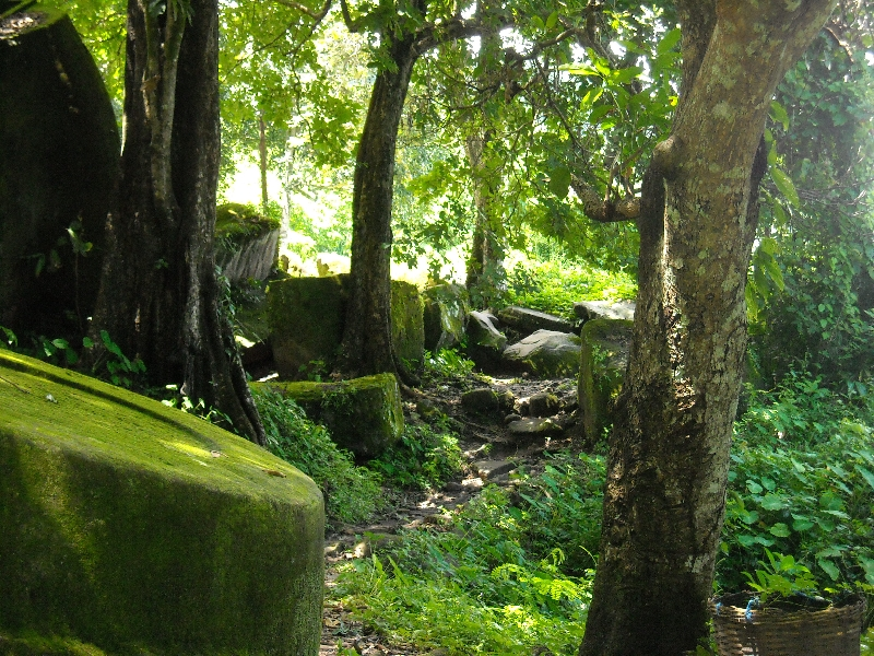 Preah Vihear Cambodia Green bush land