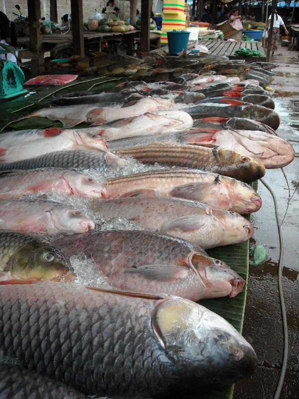 Pictures of the fish market in Cambodia, Cambodia