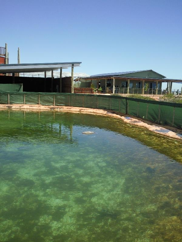 The Shark Lagoon in Denham, Denham Australia