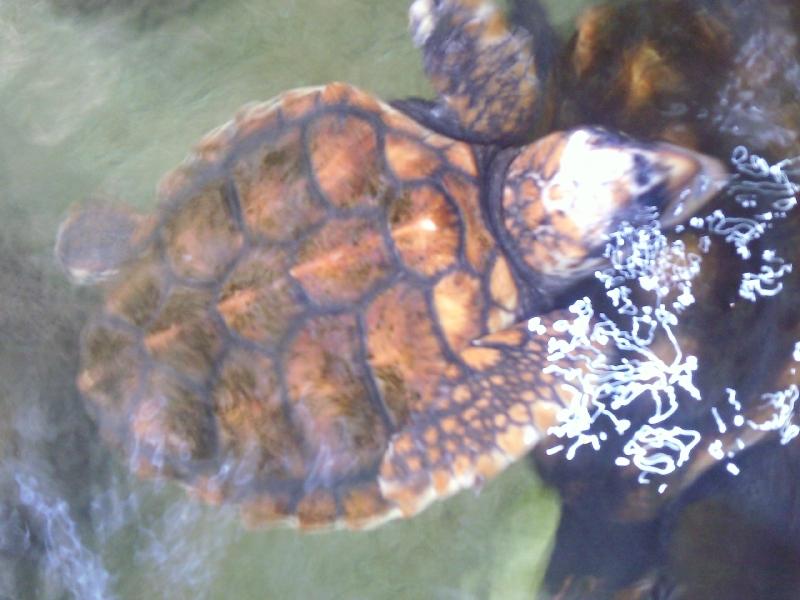 Denham Australia Turtles at Ocean Park