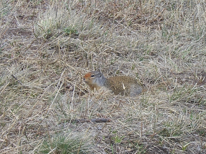 Pictures of a squirrel, Calgary Canada