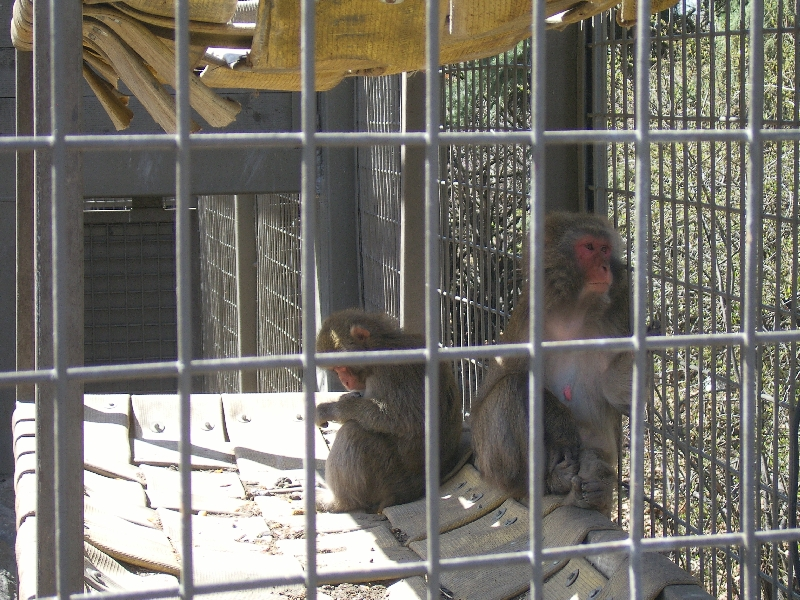 Monkeys in the Calgary Zoo, Canada