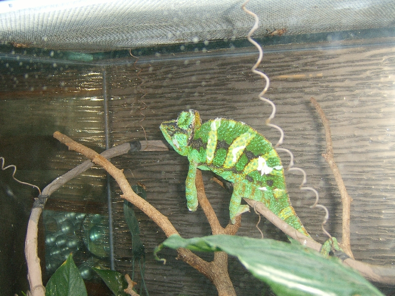 Beautiful reptiles in Calgary, Calgary Canada
