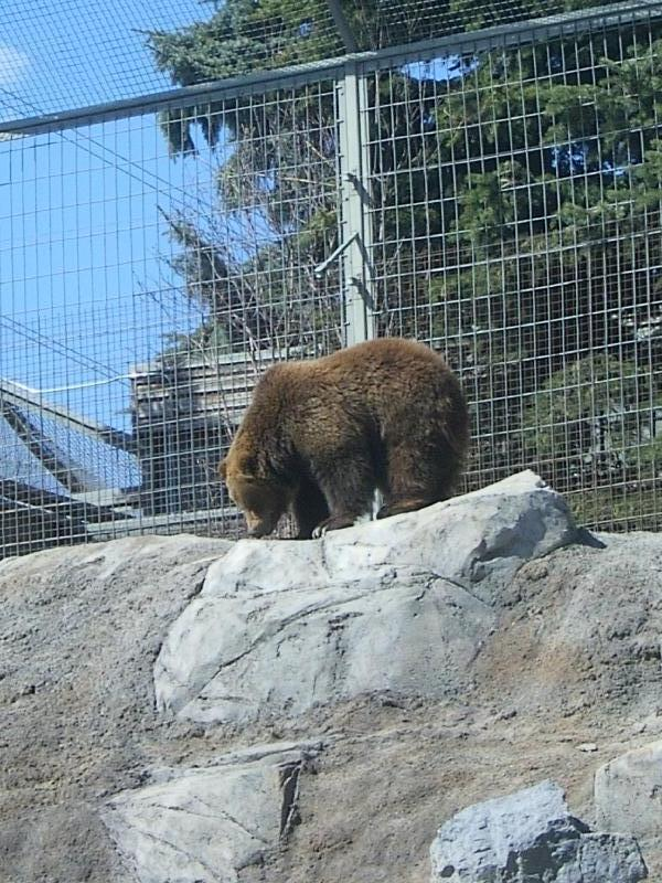 Canadian habitat in the zoo, Canada