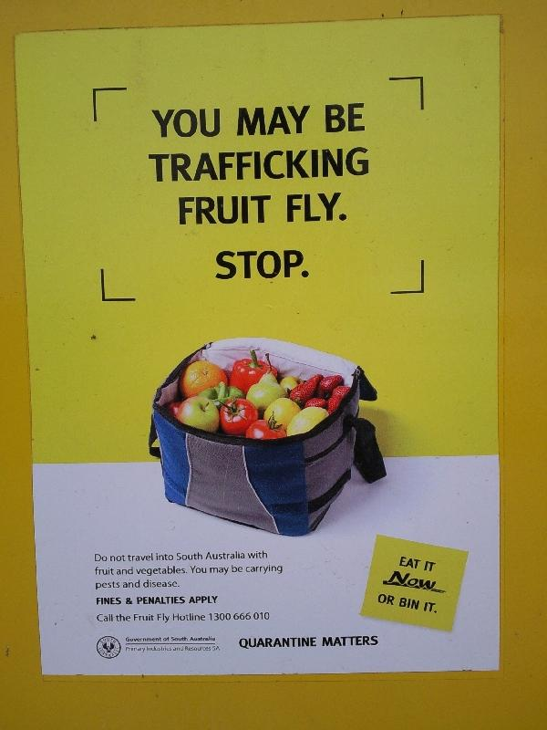 Dropping our fruit in South Australia, Australia