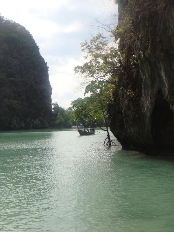 Mangrove Forest Ko Hong, Thailand