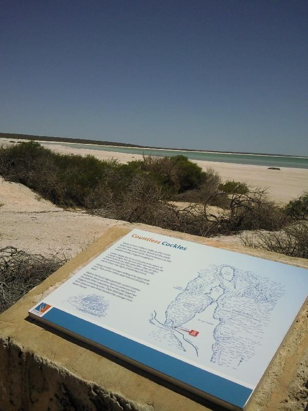 Shark Bay Australia Day trip to Shell Beach