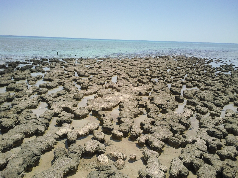 Shark Bay Australia The stromatolites of Hamelin Pool