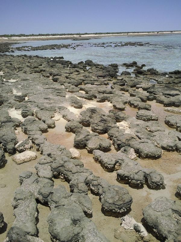 Shark Bay Australia The stromatolites of Shark Bay