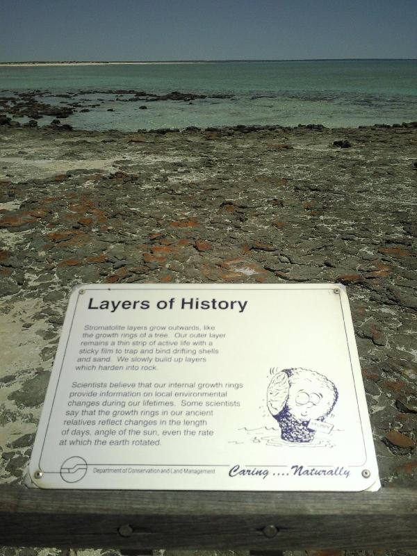 Information on the stromatolites, Shark Bay Australia