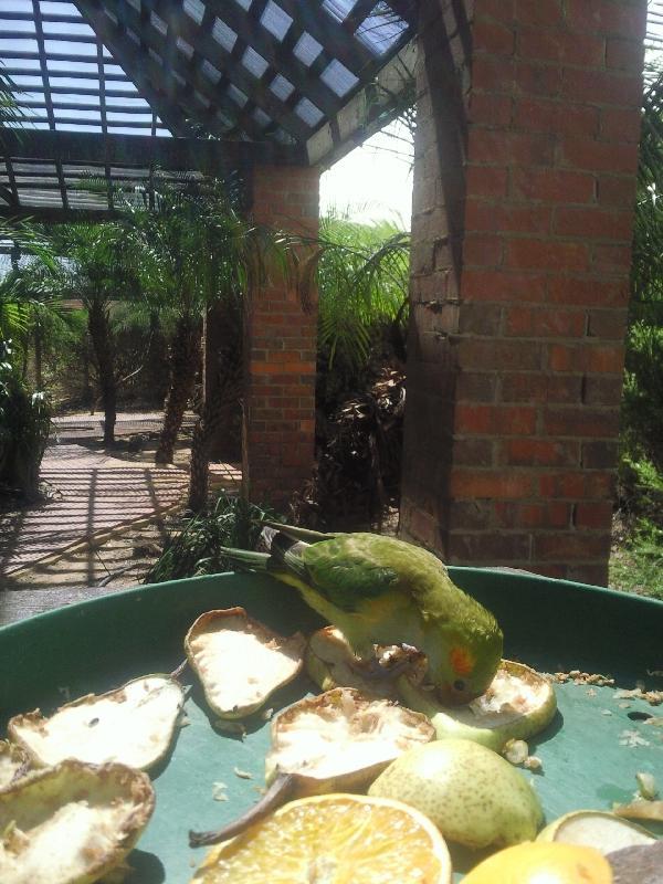 My favourite parrot, Australia