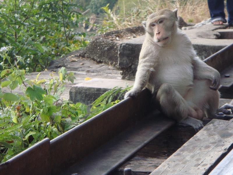 Monkey in Kanchanaburi, Kanchanaburi Thailand