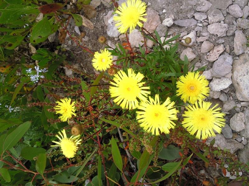 Pictures of flora Kangaroo Island, Australia