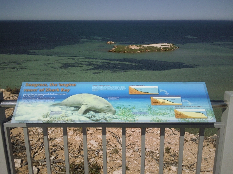 Shark Bay Australia Dugongs around Dirk Hartog Island