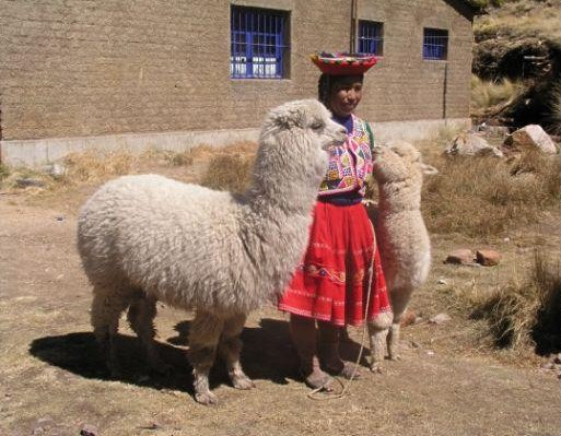 Peruvian woman with lamas, Machu Picchu Peru