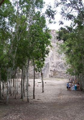 The forest walks around Yucatan, Yucatan Mexico