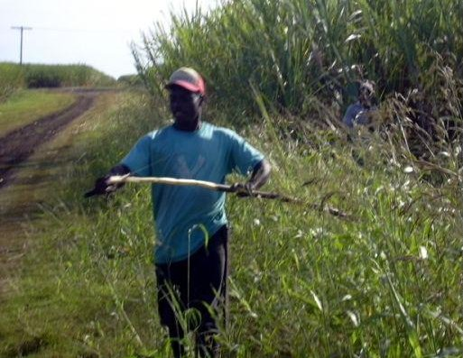 Locals in the sugar cane fields, Dominican Republic