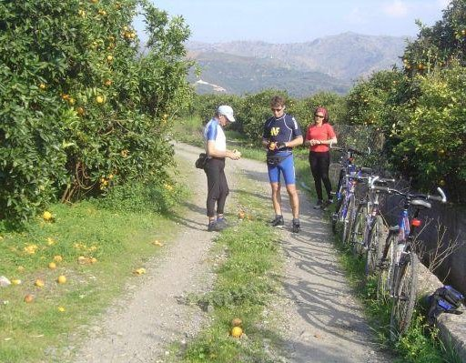 Picking oranges on a cycle tour , Greece