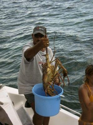 Fresh lobster in Cuba., Cayo Largo Cuba