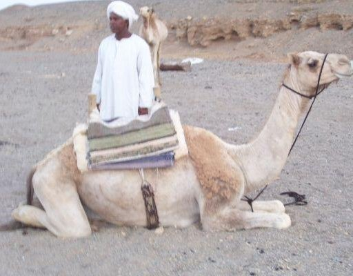 Camel ride tour in the Egyptian desert., Egypt
