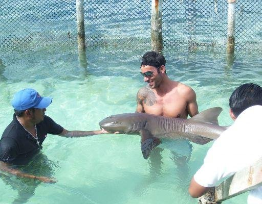 Holding a shark on the Catamaran Tour in Mexico., Mexico