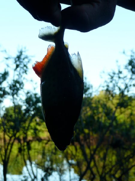 Piranha fishing in Bolivia, pampas tour., Bolivia