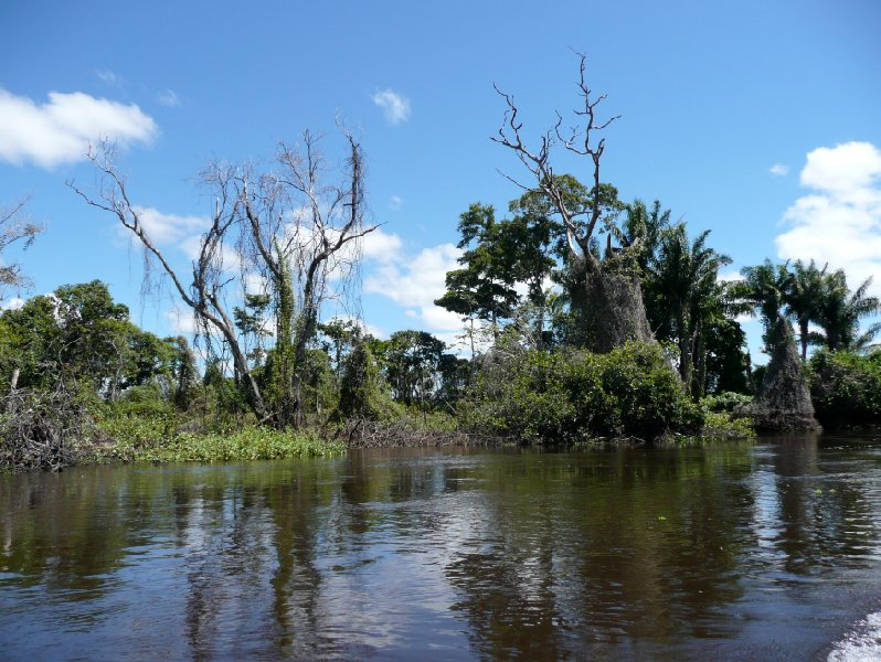 Pampas tour, through the swamps of Bolivia., Rurrenabaque Bolivia
