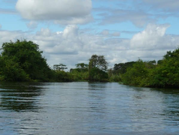 Photos of the pampas near Rurrenabaque, Bolovia., Bolivia