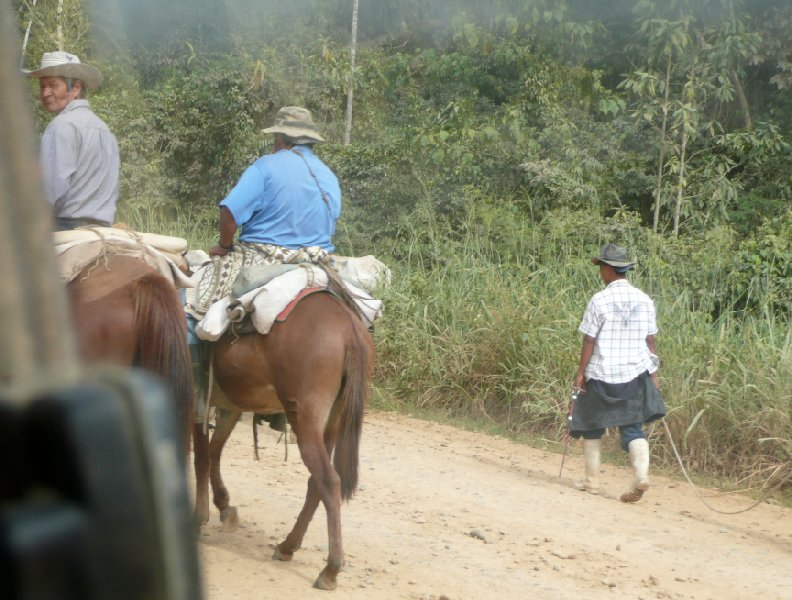 Bolivian horses on the road., Rurrenabaque Bolivia