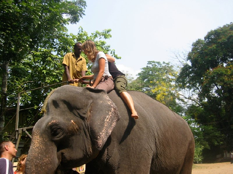 Riding the elephants in Kochi., India