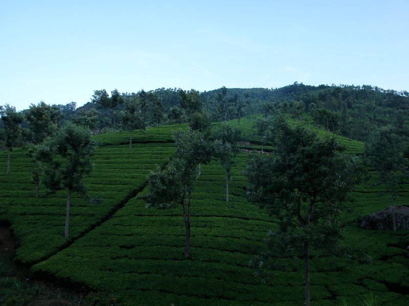 Amazing green landscapes, Kerala, India., India