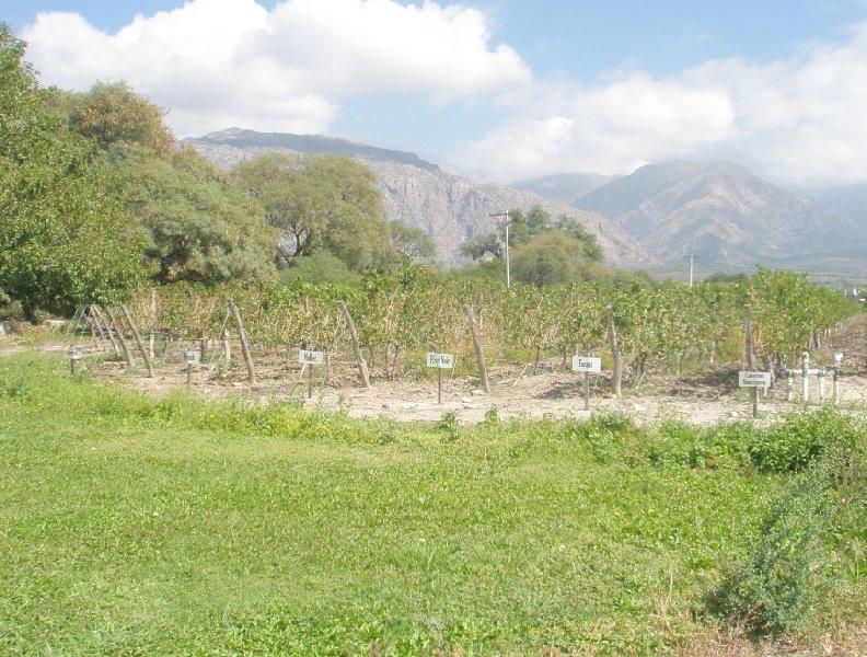 Argentinian wine Mendoza, Argentina