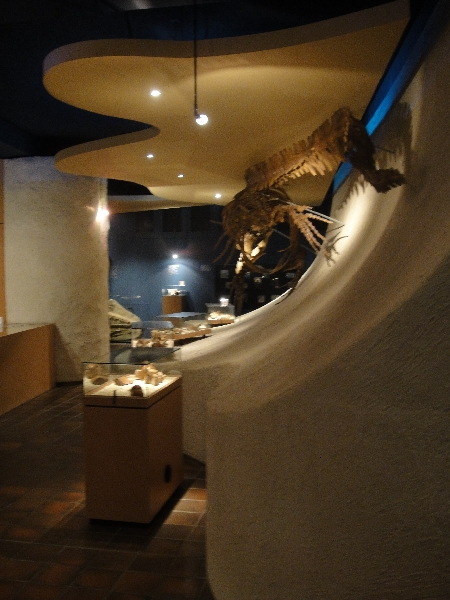 Photos of the Nature Histiry Museum in Maastricht, Netherlands