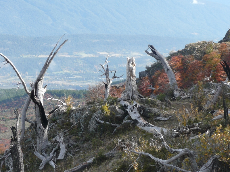 The Carved Forest and the valley of El Boldon, Argentina