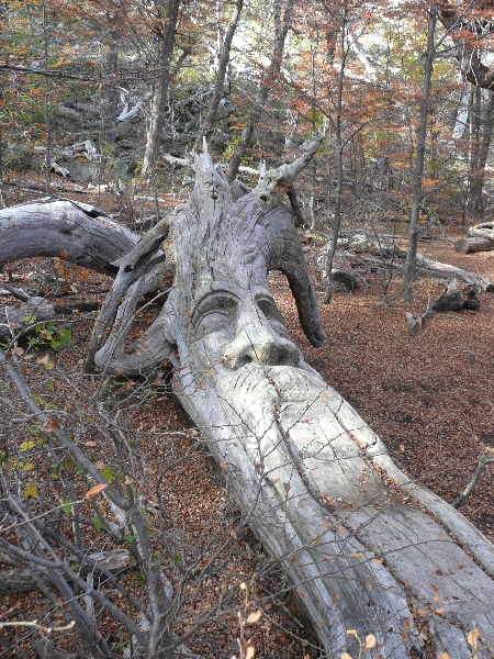 Photos of the Carved Forest of El Bolson Tallado, Argentina