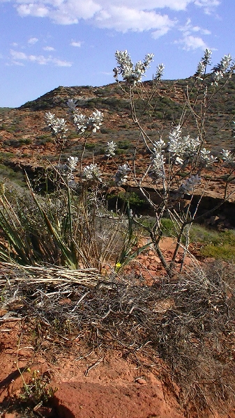 Photos of the flora in Kalbarri, Australia