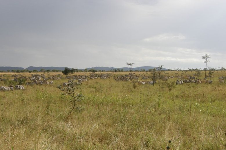 Pictures of the Serengeti National Park in Tanzania, Tanzania