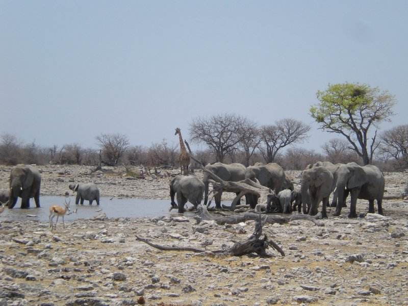 Wildlife at the waterholes of Etosha National Park, Namibia, Kunene Namibia