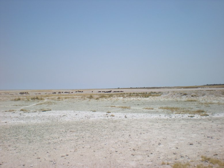 Salt lakes in Etosha National Park, Namibia, Namibia