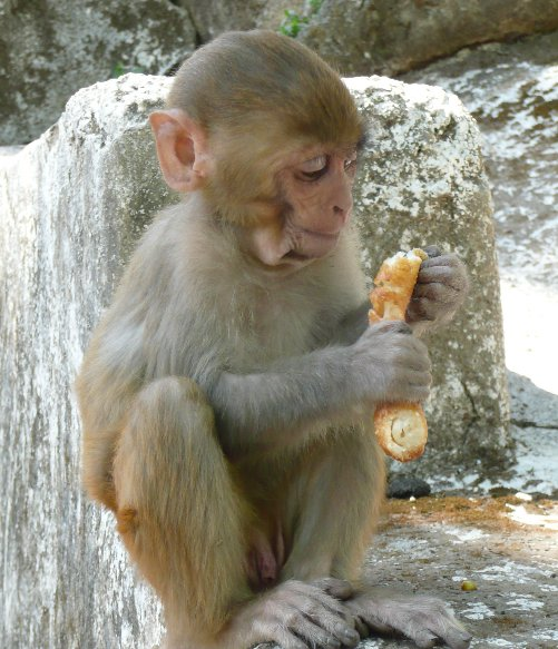 Pictures of the Monkey Temple in Katmundu, Myanmar, Nepal