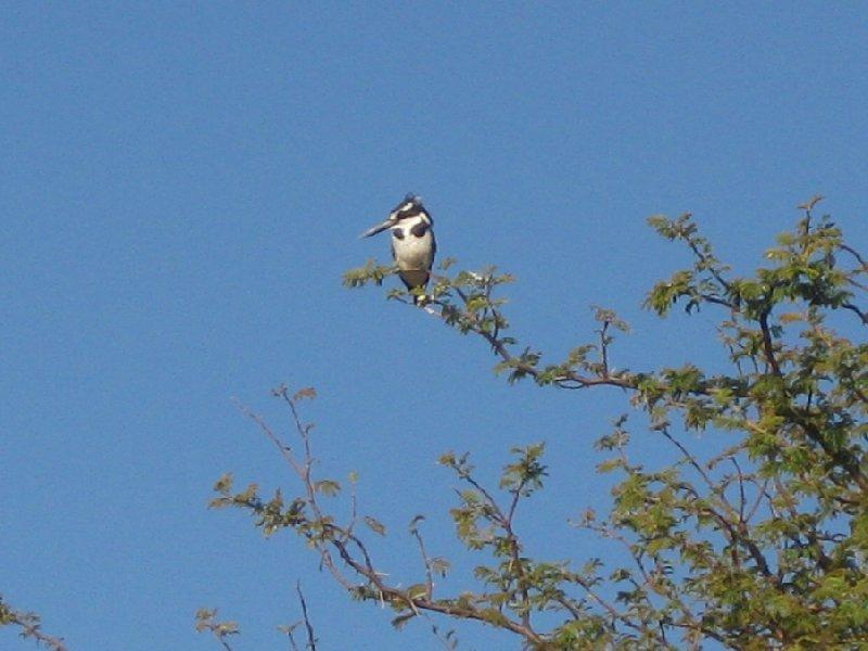 Photos Birdlife in Okavango Delta, Botswana, Kasane Botswana