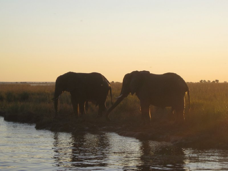 Elephants at sunset, Botswana, Kasane Botswana