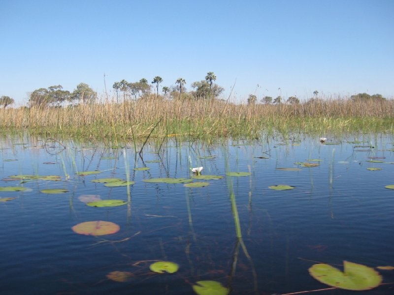 Photos of the Okavango Delta, Botswana, Botswana