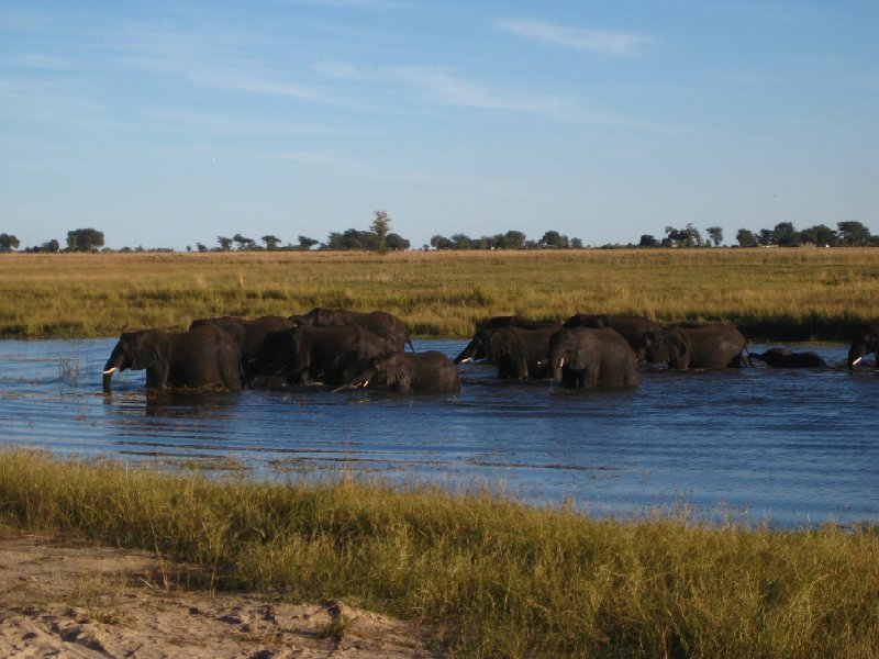 Bathing Elephants in Botswana, Botswana