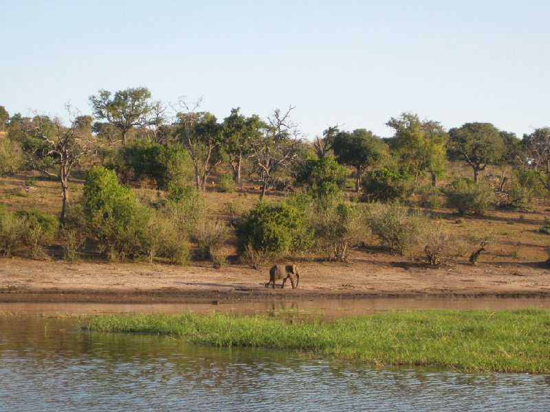 Safari Tours Moremi Wildife Reserve and Chobe National Park, Botswana, Botswana