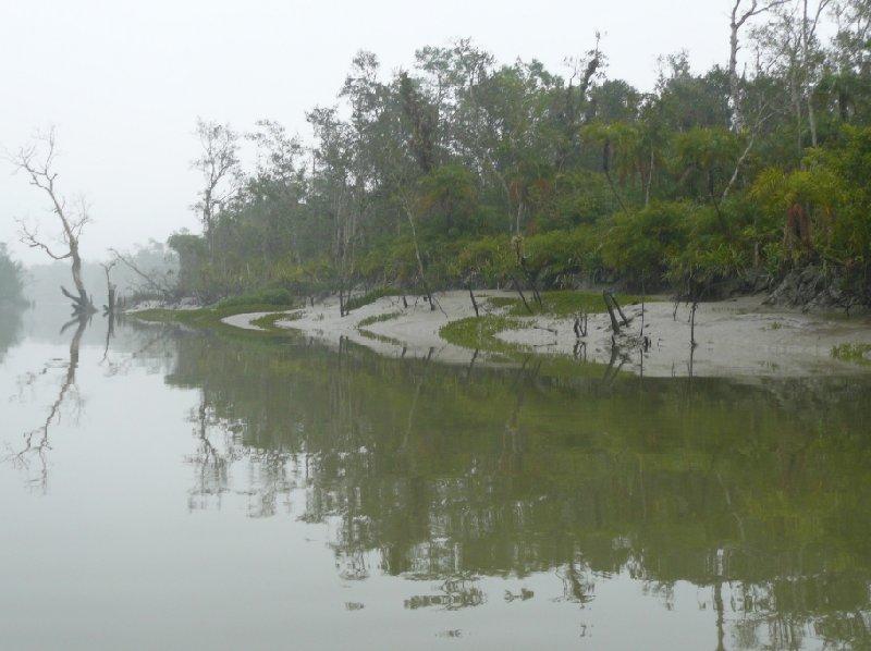 Sundarbans National Park, Bangladesh, Sundarbans Bangladesh