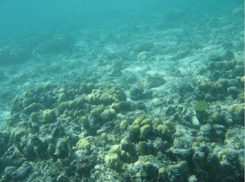 Marine Life in Tonga, Tonga