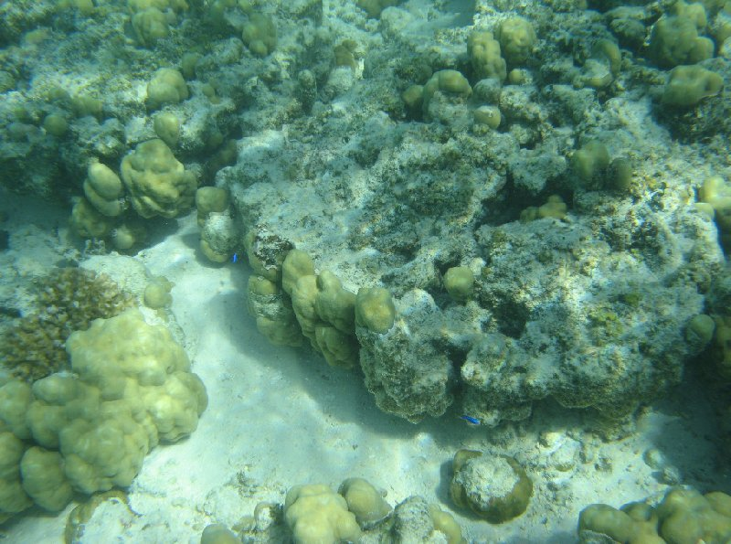 Snorkeling in the waters of the Tonga Islands, Nuku'alofa Tonga