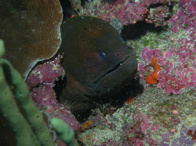 Moray eel at the Solomon Islands, Solomon Islands